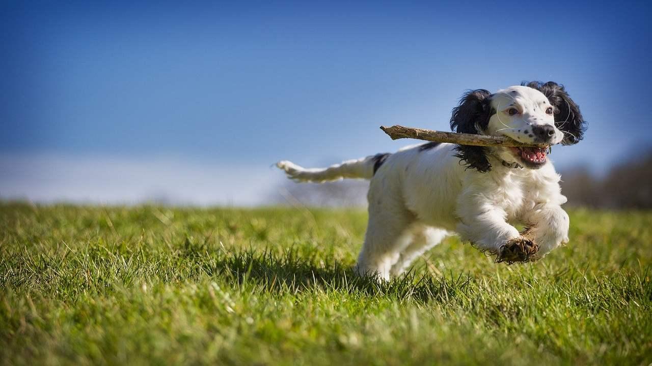 Le chien mange des morceaux de bois: les causes, les risques et les conséquences sur son alimentation