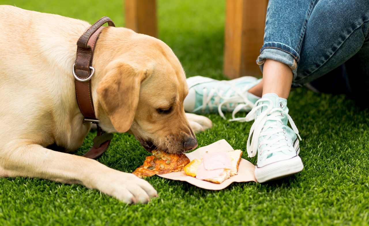 Le chien peut-il manger de la charcuterie? Risques et avantages à cet égard