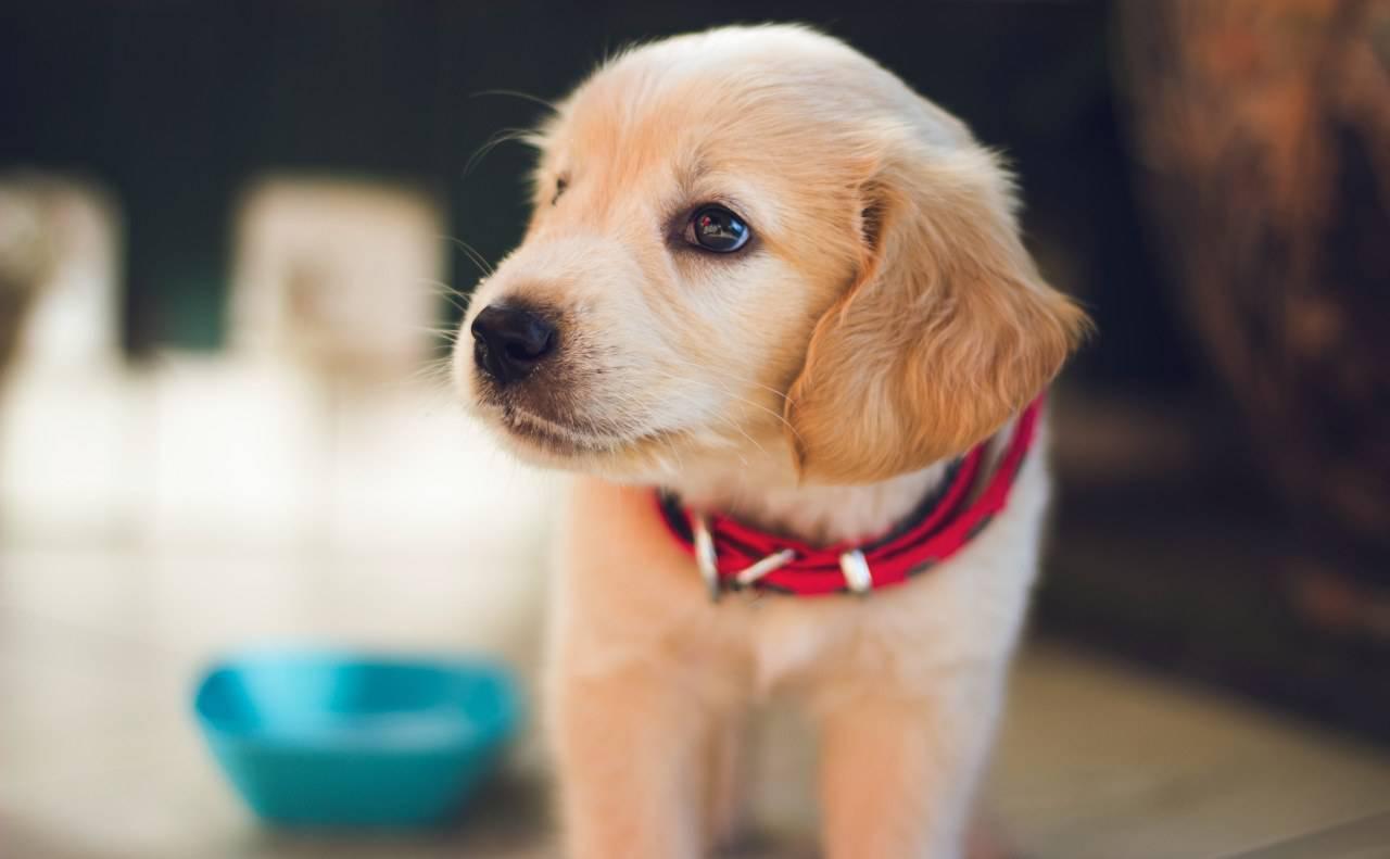 Le chien peut-il manger du foie? Avantages et risques à cet égard