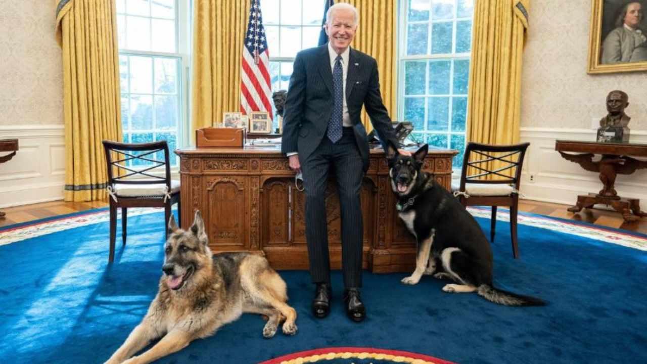 Les chiens de Joe Biden pour la première fois dans le bureau ovale