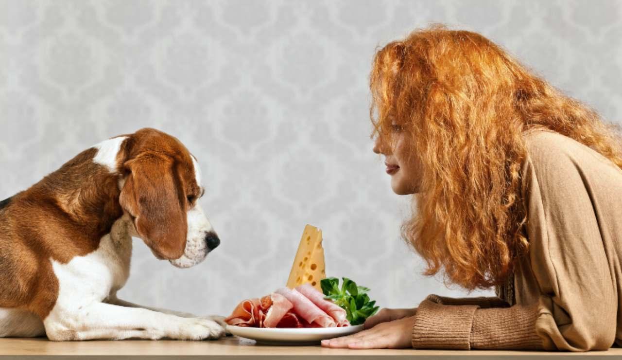 Les chiens peuvent-ils manger de la bresaola? Conseil d'Expert