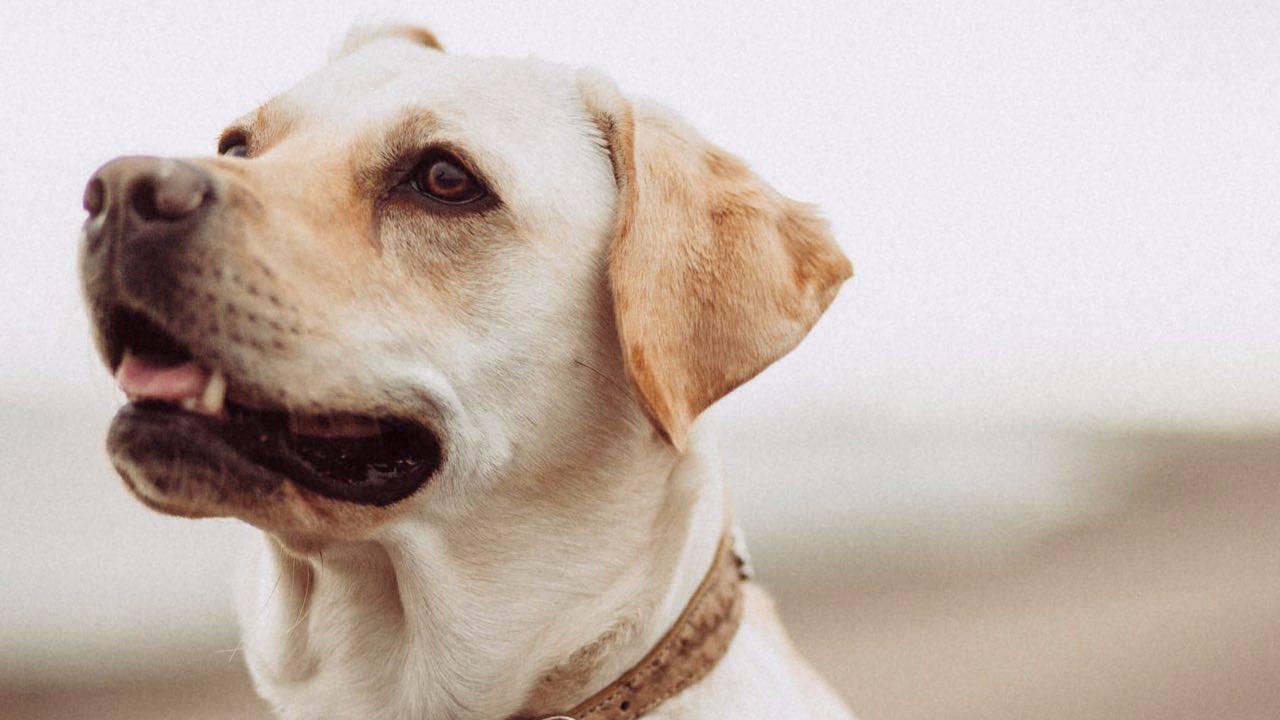 Les chiens peuvent-ils manger des aubergines? Risques et avantages pour notre Le chien