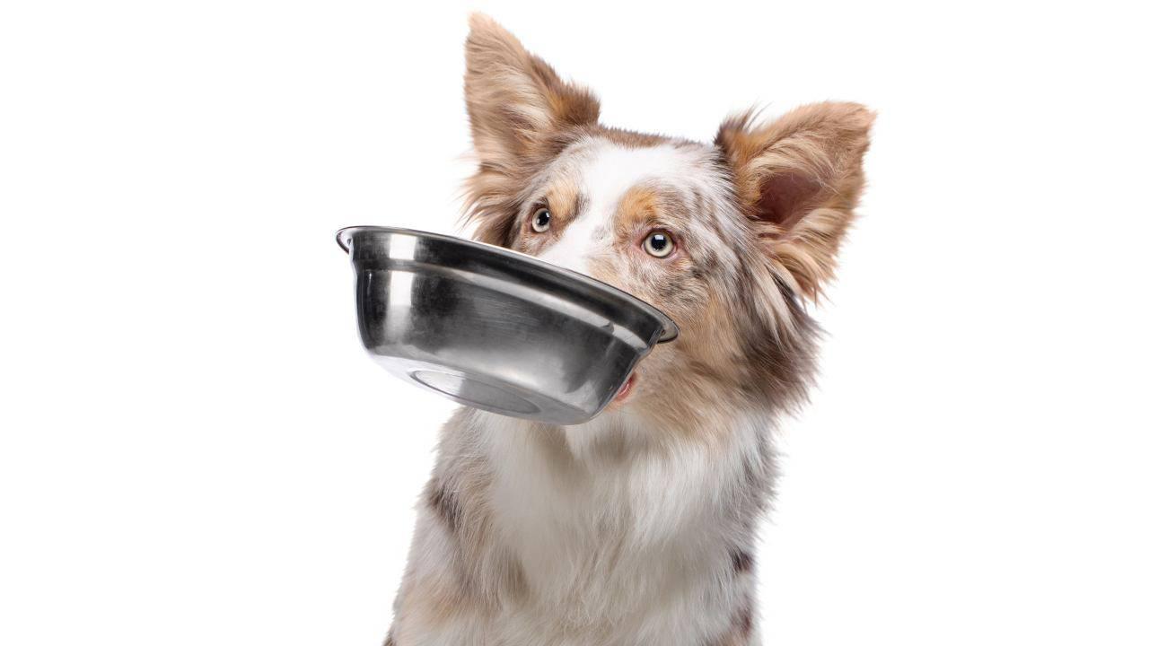 Les chiens peuvent-ils manger des câpres? Avantages et inconvénients de cette nourriture