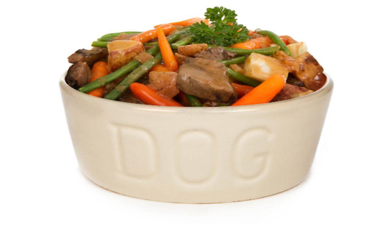 Les chiens peuvent-ils manger des haricots verts? Y a-t-il des avantages ou des risques?