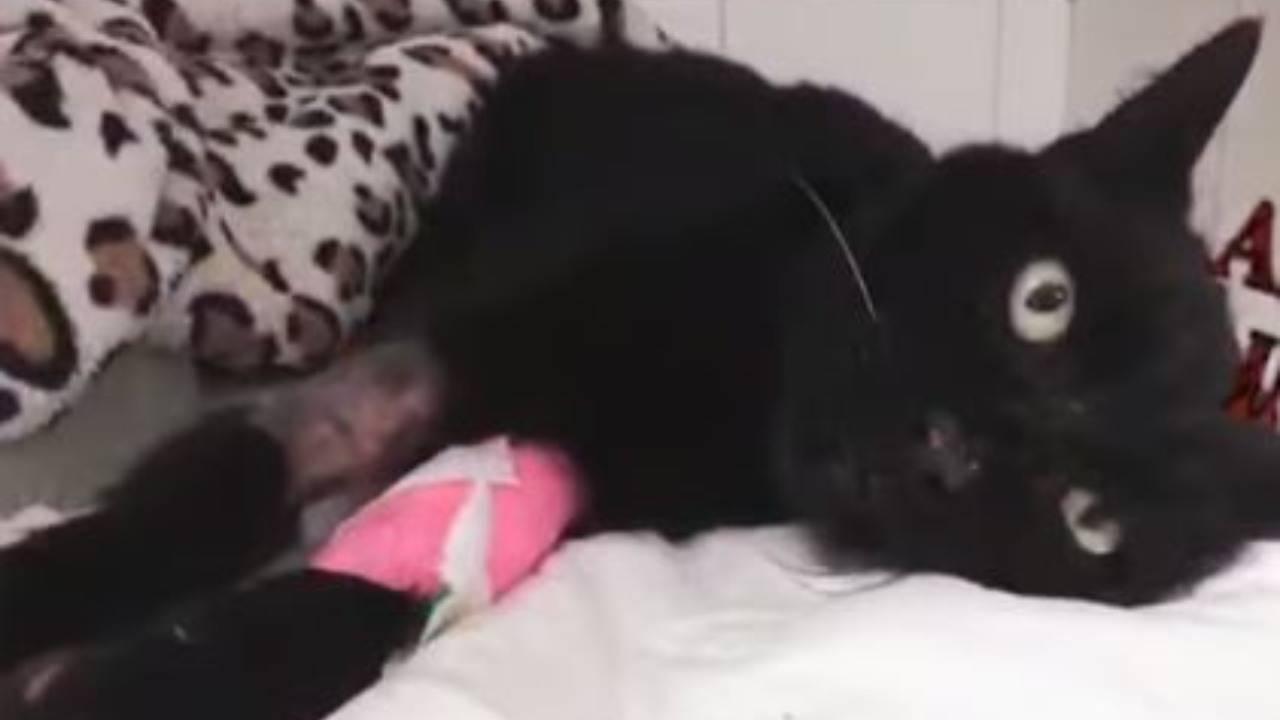 Madleine, le chat noir qui se bat dur pour rester en vie