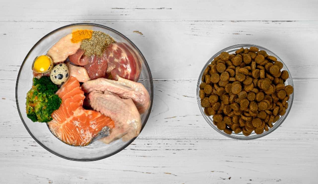 Recettes pour chiots: plats captivants, faites-le vous-même