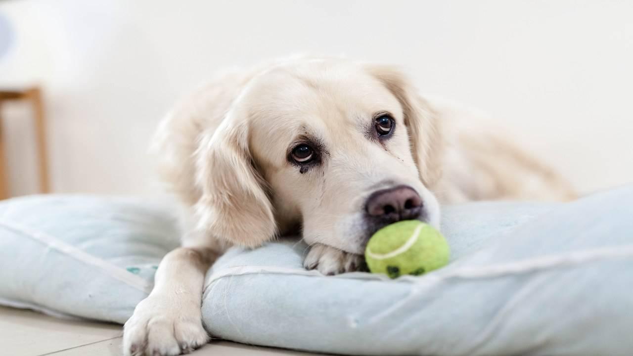 Le chien est à terre: remèdes et conseils pour se comporter