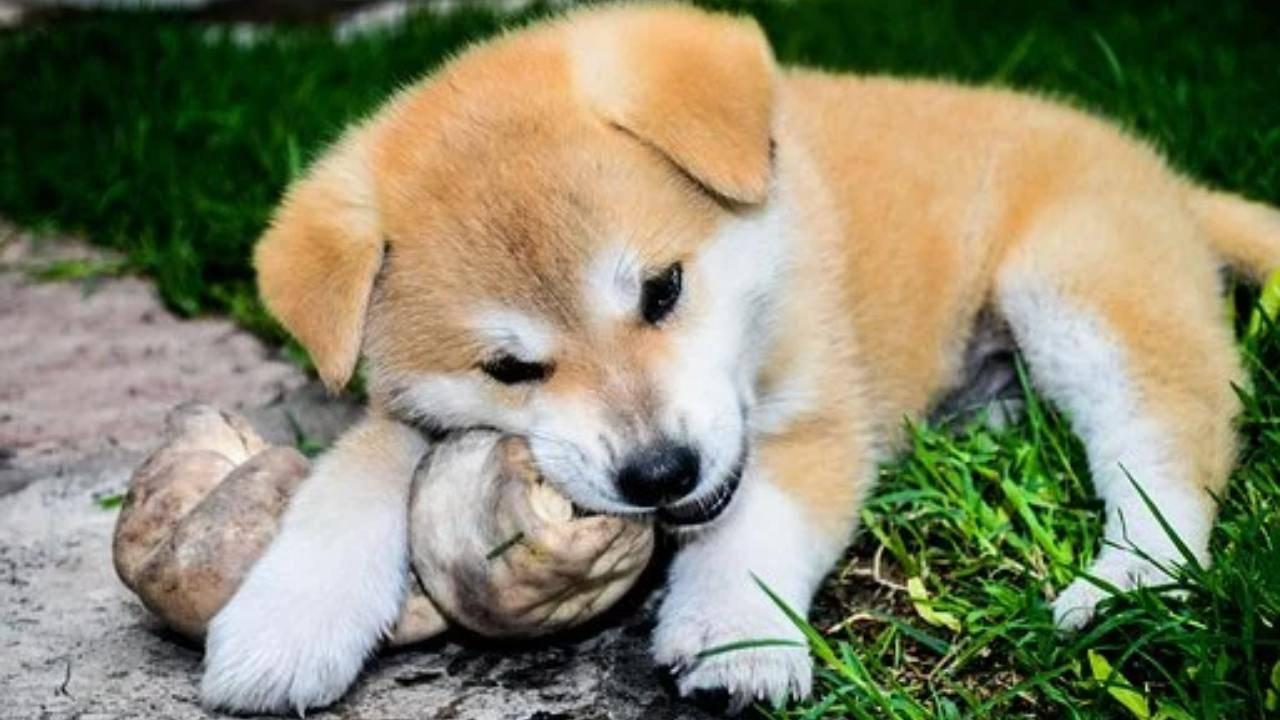 Os de peau de chien: risques et avantages et l'alternative naturelle