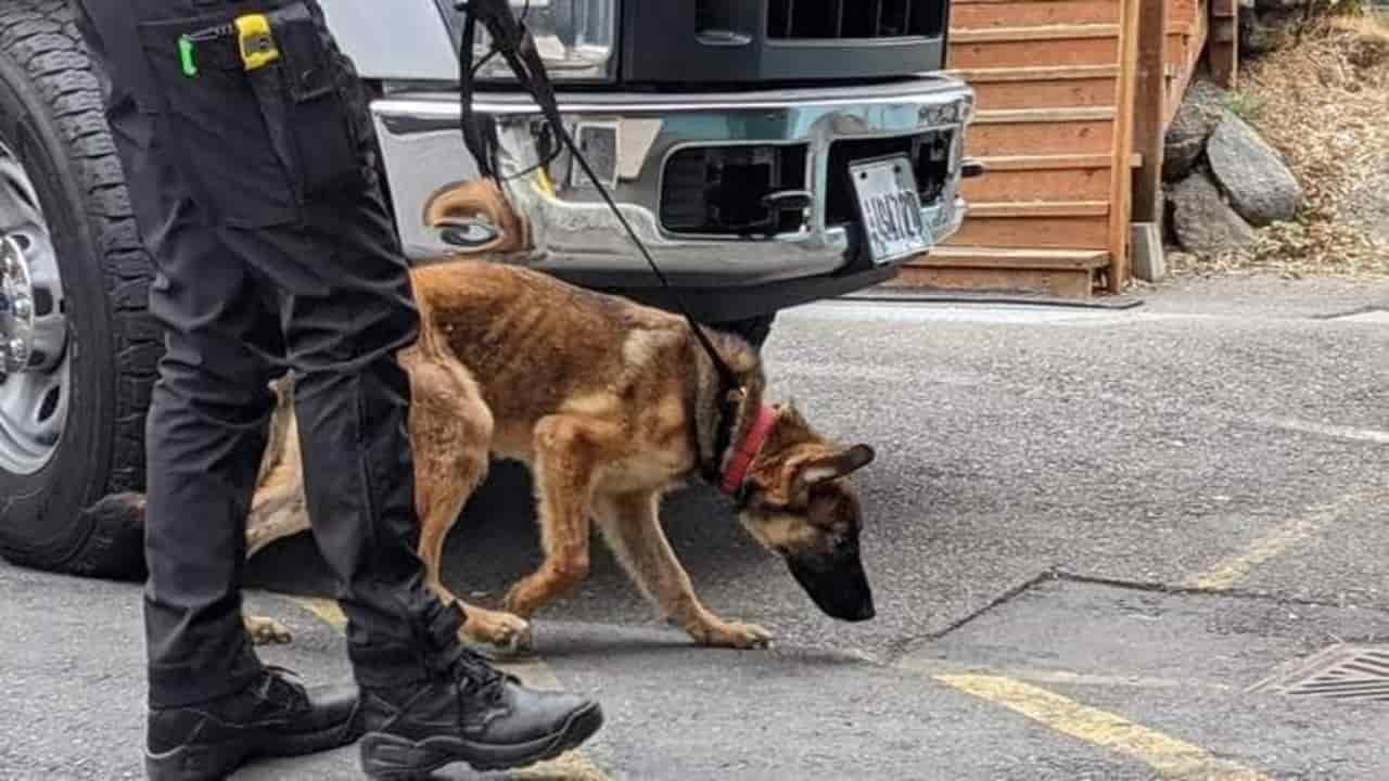 Maltraités et abandonnés : 5 chiens mourants secourus par la police (PHOTO)
