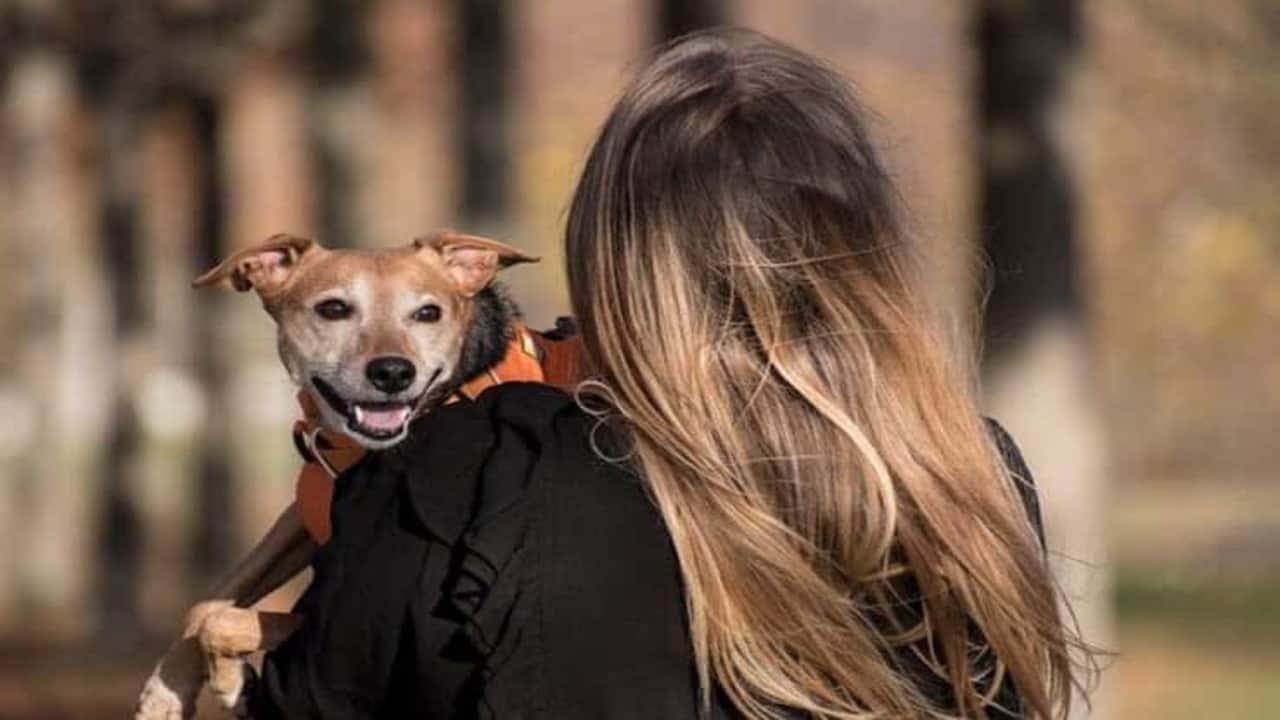 Violence domestique et maltraitance animale : une solution pour aider