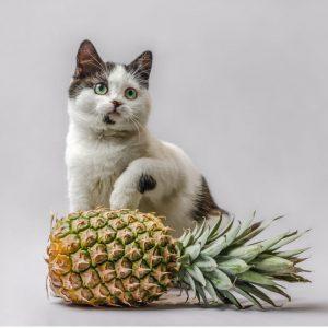 Les chats peuvent-ils manger de l'ananas ?